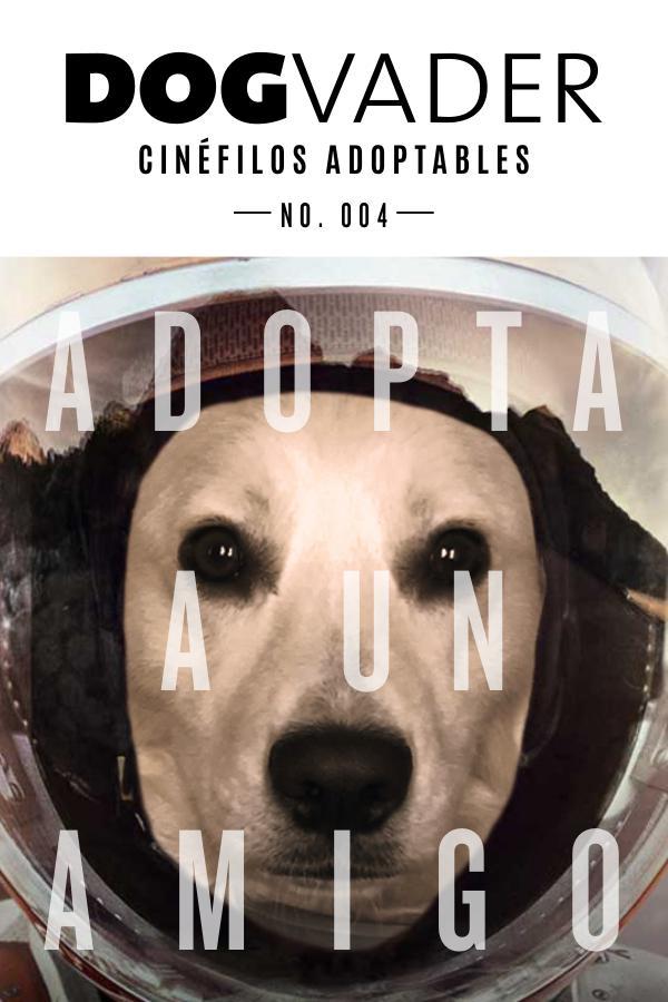 DogVader #004