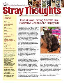 Stray Thoughts 2018 Volume 4