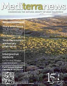 Mediterranews (English)