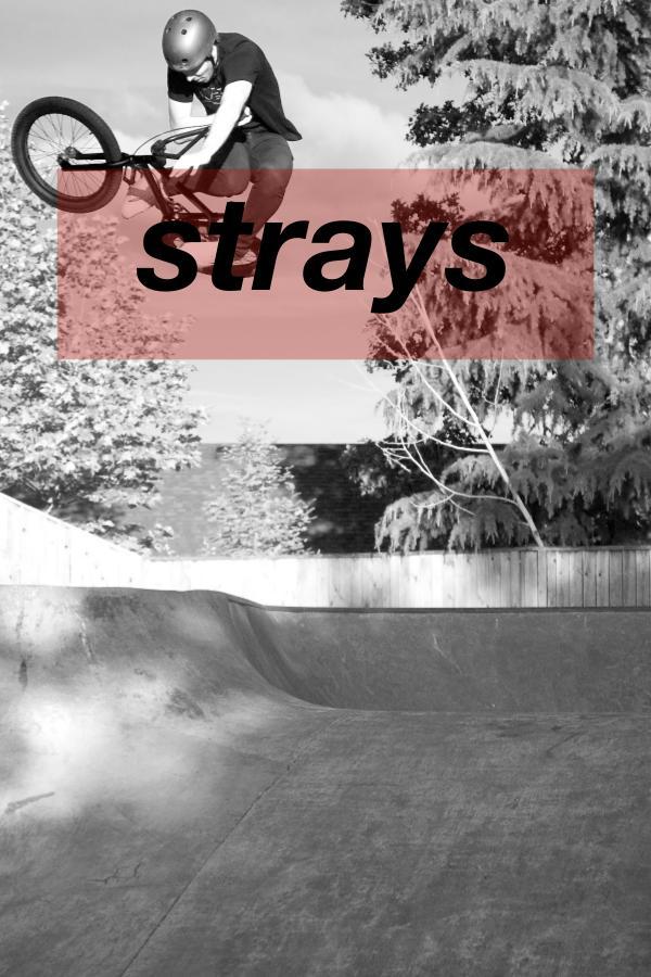 Strays BMX Strays 3