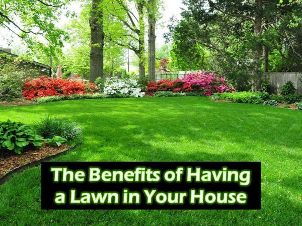The Benefits of Having a Lawn in Your House The Benefits of Having a Lawn in Your House