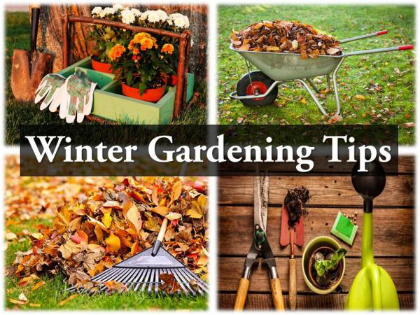 Winter Gardening Tips Winter Gardening Tips