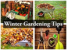 Winter Gardening Tips