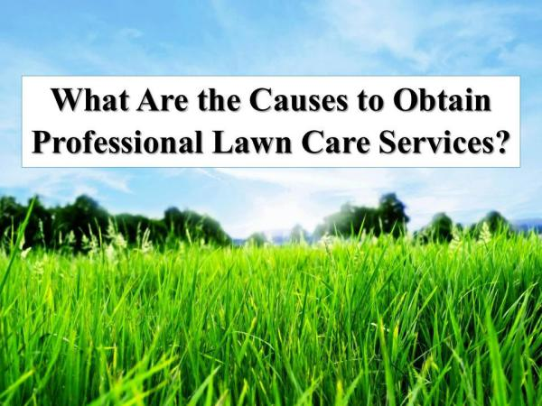 What Are the Causes to Obtain Professional Lawn Care Services? What Are the Causes to Obtain Lawn Care Service