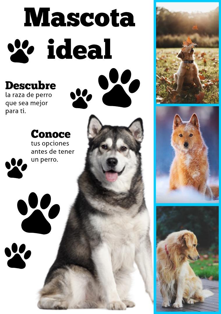 Mascota Ideal Editada por Diana La Rosa