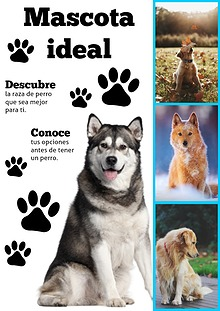 Mascota Ideal