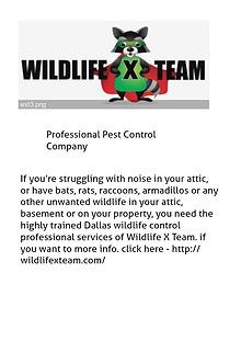Professional Pest Control Company