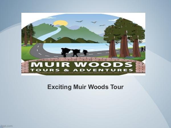 Exciting Muir Woods Tour Exciting Muir Woods Tour