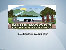 Exciting Muir Woods Tour