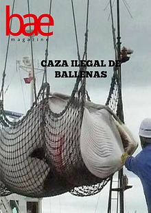 Caza ilegal de ballenas