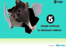 5 simple methods to eliminate rodents from your home