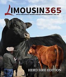Limousin 365