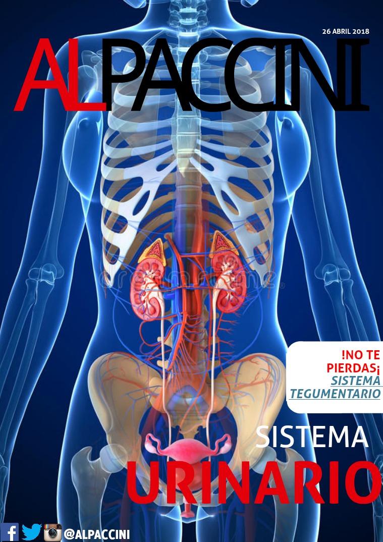 AL PACCINI 6 Sistema Urinario