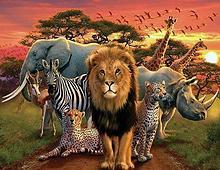 phyla del reino Animalia