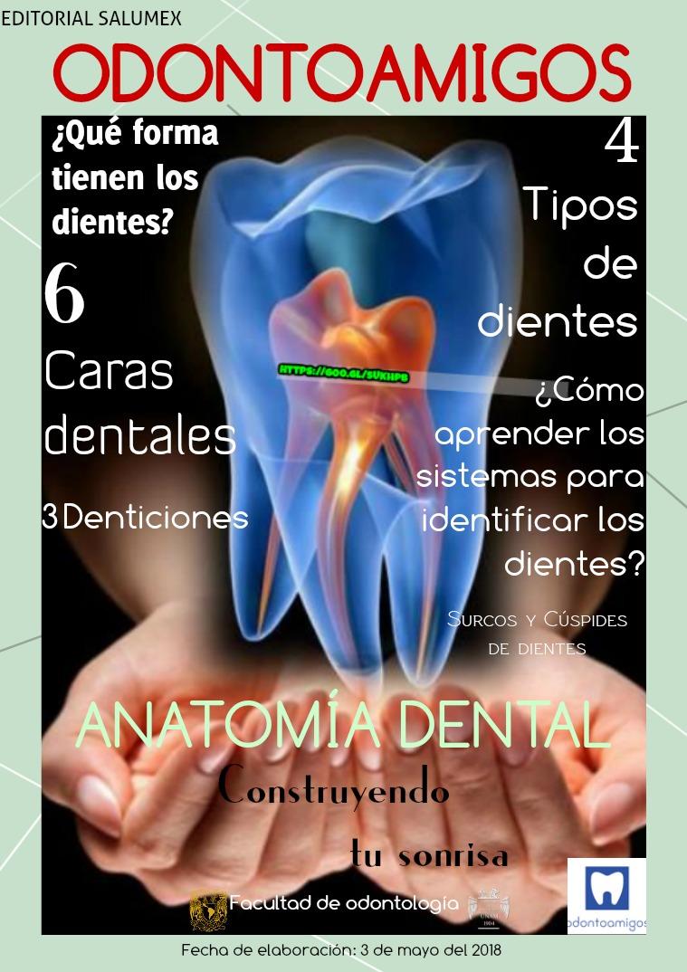 Anatomía Dental Dientes y Anatomía. | Joomag Newsstand