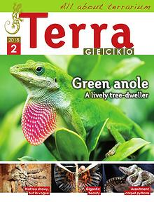 Terra Gecko Magazine : All about terrarium