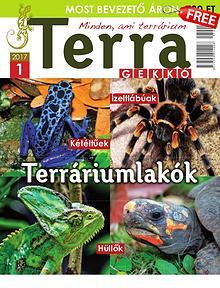 Terra Gekkó Magazin