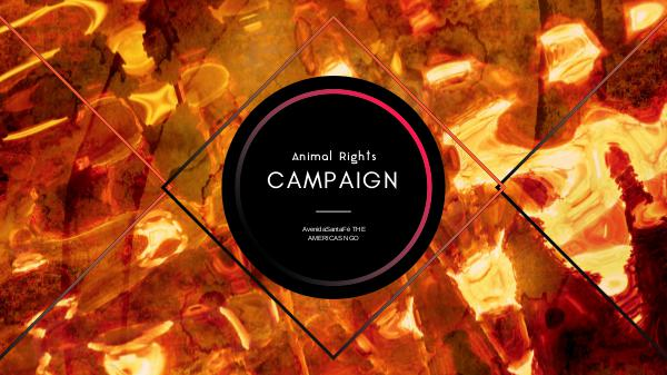 AR Campaign AR Campaign